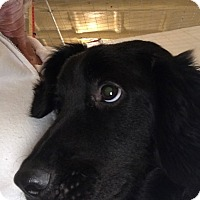 Adopt A Pet :: Baxter - Folsom, LA