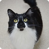 Adopt A Pet :: Precious - Naperville, IL