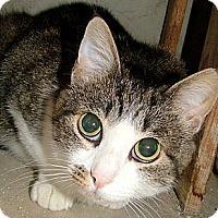 Adopt A Pet :: Sugar - Chattanooga, TN
