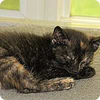 Adopt A Pet :: Dena - Victor, NY