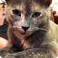 Adopt A Pet :: Peaches - Summerville, SC