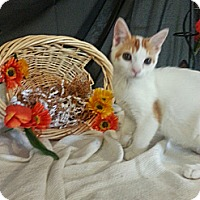Adopt A Pet :: Rodeo - Clearfield, UT