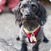Adopt A Pet :: Axel - Kingwood, TX