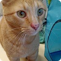 Adopt A Pet :: Paprika - Chicago, IL