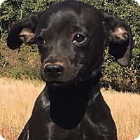 Adopt A Pet :: Tito - Allentown, PA