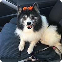 Adopt A Pet :: Mystic - conroe, TX
