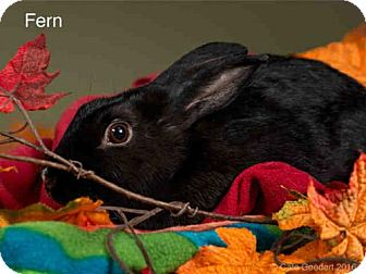 Polish for adoption in Santa Fe, New Mexico - FERN