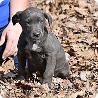 Adopt A Pet :: Wyn - Groton, MA