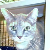 Adopt A Pet :: Paisley - Muscatine, IA