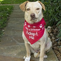 Adopt A Pet :: Serenity - Houston, TX