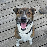 Adopt A Pet :: Marcus - Londonderry, NH