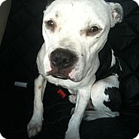 Adopt A Pet :: Gilbert - WARREN, OH