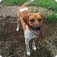Adopt A Pet :: Sparky - Linton, IN