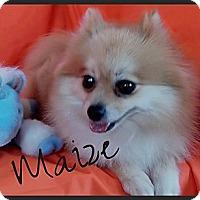 Adopt A Pet :: Maize - Orange, CA