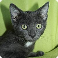 Adopt A Pet :: Tess - Richland, MI