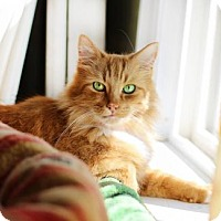Adopt A Pet :: Rascal - Markham, ON