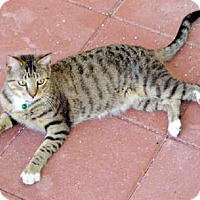 Adopt A Pet :: PINEY - Sanford, FL
