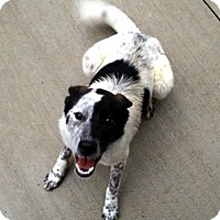 Adopt A Pet :: Romeo - Westwood, NJ