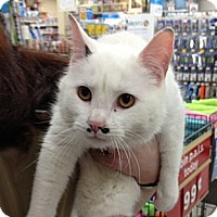 Adopt A Pet :: Groucho Marx - Troy, OH