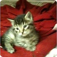 Adopt A Pet :: Tinker - New Egypt, NJ