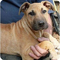 Adopt A Pet :: Lucy - Harrison, AR