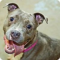 Adopt A Pet :: Nena - WARREN, OH