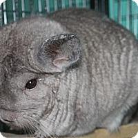 Adopt A Pet :: Gandolf - Titusville, FL