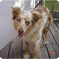 Adopt A Pet :: Nugget - Orlando, FL