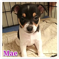 Adopt A Pet :: MAE - Fort Worth, TX