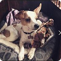 Adopt A Pet :: James Dean - Huntington Beach, CA