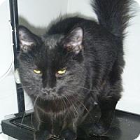 Adopt A Pet :: Felix - Hamburg, NY