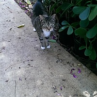 Adopt A Pet :: Ladybug - Naples, FL