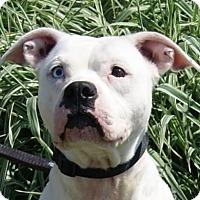 Adopt A Pet :: Vena - Monroe, MI