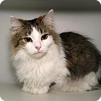 Adopt A Pet :: Jazelle - Milford, MA