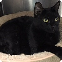 Adopt A Pet :: Candy - Oakdale, CA