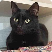 Adopt A Pet :: NIKKO - Pittsburgh, PA