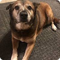 Adopt A Pet :: Ida - Springfield, MO