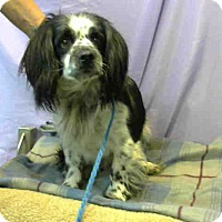 Adopt A Pet :: URGENT 5/25 @ DEVORE - San Bernardino, CA