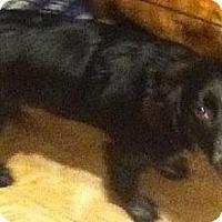 Adopt A Pet :: Oreo - Hilham, TN