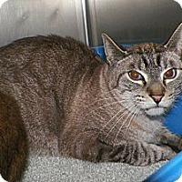 Adopt A Pet :: Simon - Dover, OH