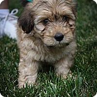 Adopt A Pet :: Mason - Broomfield, CO