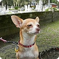 Adopt A Pet :: Vesta - Duluth, GA