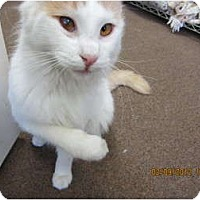 Adopt A Pet :: Pretty Boy - Bunnell, FL
