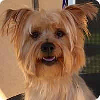 Adopt A Pet :: Hermie - Orlando, FL