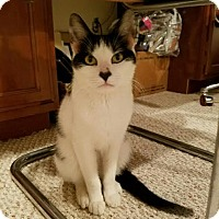 Adopt A Pet :: Holly - Glen Mills, PA