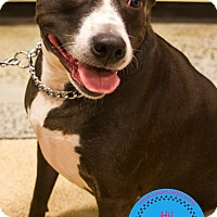 Adopt A Pet :: Brooklyn - Staten Island, NY