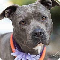 Adopt A Pet :: JUANITA - Carlsbad, CA