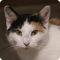 Adopt A Pet :: Zenna - West Des Moines, IA