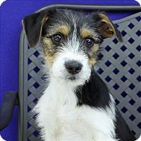 Adopt A Pet :: Dawson - Fort Davis, TX