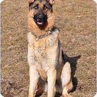 Adopt A Pet :: Leila - Hamilton, MT